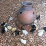 pfk_chicken project (3)